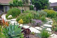 drought resistant plants for parkways in southern california - Google Search