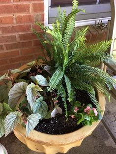 Begonia and fern will fill in nicely.