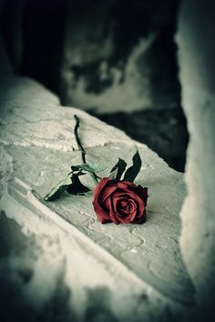 A single rose....the reminder that in joy there is depair as there are thorns on something as beautiful as a rose...