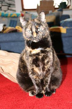 Willow Cat | Pawshake