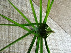 Coconut Palm Weaving Instructions Pictures