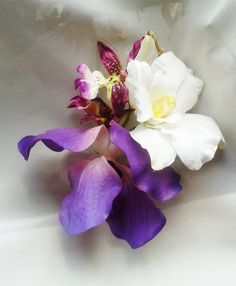 TROPICAL HAIR CLIP  Purple & White Orchids Flower by MalamaPua, $36.99