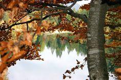 Non vi sono parole per poter spiegare cosa si prova osservando il #lago mentre si cammina sulle sue sponde #lagoditovel #trentinowow