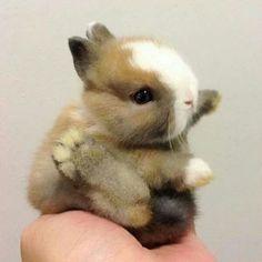 Teeny tiny baby bunny
