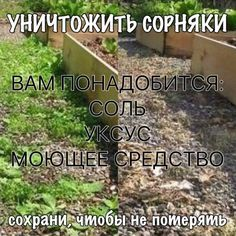 VK is the largest European social network with more than 100 million active users. Summer House Garden, Green Garden, Farm Gardens, Outdoor Gardens, Smart Garden, Urban Farming, Garden Planning, Horticulture, Gardening Tips