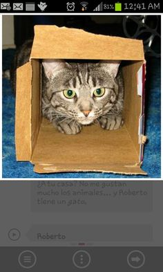 Why do cats luv the smallest places?