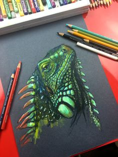 Iguana drawing on black paper. Art For Kids Hub, Art Hub, Polychromos, Colorful Drawings, Cool Drawings, Colored Pencils, Colored Paper, Art Boards, Black Paper Drawing