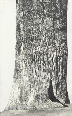 PATRICK VAN CAECKENBERGH, Drawings of Old Trees (summer 2010)  (18,5 x 28,6) + (20,2 x 19,2) + (27,3 x 17,0) cm  pentel 120 3DX - 0,5 mm A315 on paper