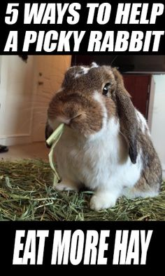 5 Ways To Help a Picky Rabbit Eat More Hay! Click the picture to find out!