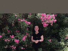 Cum se prepara Apa de salcie buna pentru inradacinarea plantelor Facebook Sign Up, Hibiscus, Herbs, Japan, Holiday Decor, Flowers, Plant, Animales, Herb