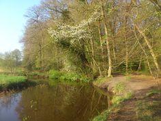 Ommetje Sterrenbos (2,5km) http://wandelenrondroden.nl/korte-routes-1-5km/wandelroutes/1-5km/rondje-sterrenbos Het Sterrenbos is vroeger aangelegd als onderdeel van het landgoed Mensinge in Roden. De stervorm was ideaal voor de jacht. Tegenwoordig is het een mooi wandelbos. Deze route is een kort ommetje door het bos. Ook komt u langs het Lieverse Diep. Langere routes zijn beschikbaar op onze website.