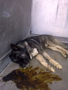 PLEASE HELP OTTO the dog at Baldwin Park Animal Care.