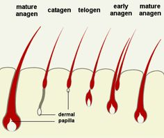 Laser hair removal  http://www.theskinclinicinc.com/laser_hair_removal