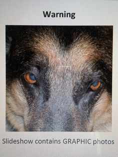 Patty, victim of animal cruelty ... Dog, skinned alive, in critical condition in Michigan