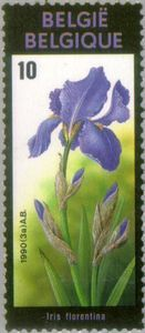 Flowers Exhibition -  Iris florentina