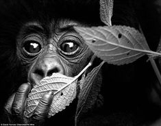 Covering its mouth: Encounter by David Yarrow is published by Clearview, in affiliation with the conservation charity Tusk, on November 12