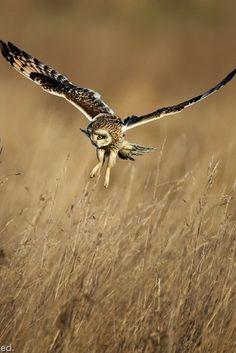 Flightless Bird, Owl Always Love You, Storks, Beautiful Owl, Night Owl, Parakeet, Birds Of Prey, Kingfisher, Raptors