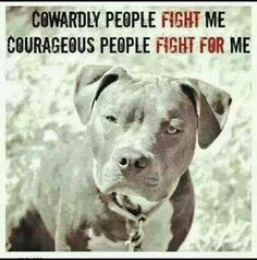 National Dog Fighting Awareness Day M.K Clintons Barking from the bayou posting Dog fighting awareness day, with Lola the Pitty, Dogs n Pawz, Love is being owned by a husky and Barking from the bayou. Dog Quotes, Animal Quotes, Pit Bull Quotes, Dog Sayings, Friend Quotes, Animal Memes, Pitbull Terrier, Bull Terriers, Pitbull Pups