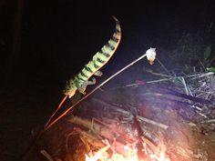 Jungle food in Amazon. Catch a small crocodile in a river and brai. Fantastic taste!