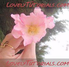 wild rose gumpaste flower tutorial