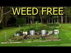 Organic Pest Control - End Problems with Bugs Forever in Your Garden - YouTube