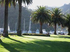 Picton NZ marina