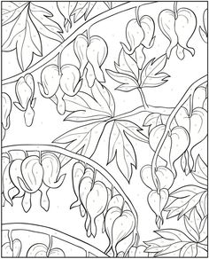 Creative Haven Floral Design Color by Number Coloring Book Dover Publishing Artwork by Jessica Mazurkiewicz