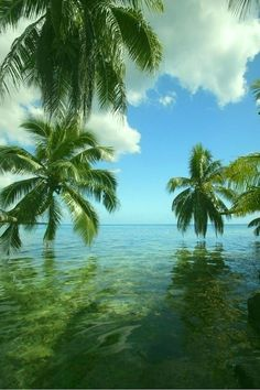 Palms, ocean and reflection...stunning...