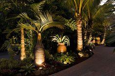Tropical garden Lighting - Landscaping Sarasota Florida with Tropical Palm Trees Palm Trees Landscaping, Florida Landscaping, Florida Gardening, Tropical Landscaping, Outdoor Landscaping, Landscaping Ideas, Tropical Gardens, Tropical Plants, Landscaping Software