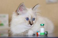 Linee guida per la corretta vaccinazione del tuo Pet