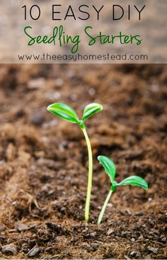 10 Easy DIY Seedling