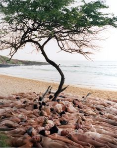 5. Beach Scene... Spencer Tunick - Maui Little Beach... i love his work.  I find the ST has an inspiring perspective on beauty and the human form.