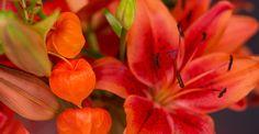 KW 36 langstielig: PURE ENERGY | 6 Lilien 4 Zierphysalis für Ihre Bodenvase | BLOOMY DAYS