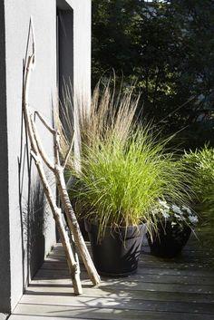 Outside - garden