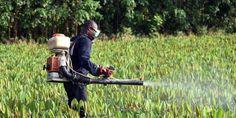 Le glyphosate, l'herbicide le plus utilisé au monde et principe actif du Roundup de Monsanto, est en cours de réévaluation en Europe. Mais l'Organisation mondiale de la santé et l'Autorité européenne de sécurité des aliments sont en désaccord sur sa dangerosité. Voici pourquoi.