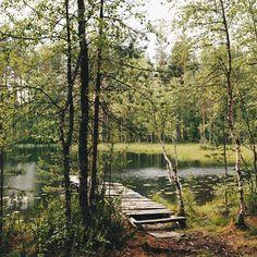 #vscocam #vsco #forest #wood #lake #landscape #nature #lifestyle #love #wild #travel #green #summer