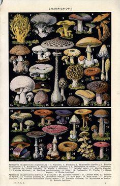 amazing-looking mushrooms