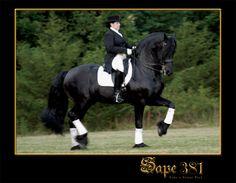 Love Sape! Beautiful stallion