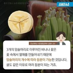 Interesting info regarding banana (ex)how to divide one into three pieces and its principles