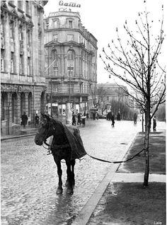 Ulica Kneza Milosa Beograd predratni