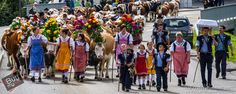 Désalpe in Charmey-The homecoming of cows after they have spent a few month high up in Alpine pasture. Cows, Switzerland, Homecoming, Street View, Places, Fashion, Moda, Fashion Styles, Fashion Illustrations