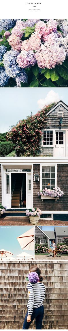 Nantucket hydrangeas - the ultimate summer house flower