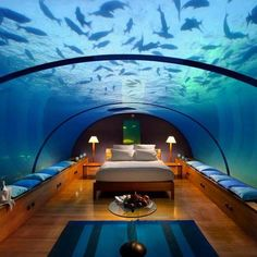 Bedroom with a wrap around aquarium. I feel like I'd wake up in the middle of the night and think I was drowning lol
