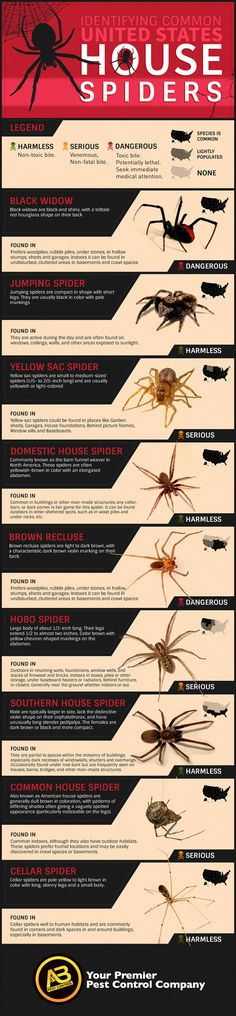 How To Identify Common Poisonous Spiders In Your Home From harmless with a non-toxic bite, to serious to dangerous. Find which spiders are common in your area of the U. via AB-Pest Control Camping Survival, Survival Tips, Survival Skills, Wilderness Survival, Survival Knots, Survival Stuff, Outdoor Survival, Emergency Preparedness, Camping Hacks