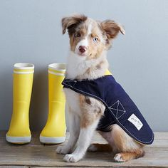 Billy Wolf Dog Rain Jacket - Blue | West Elm