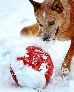Red Ball in Snow