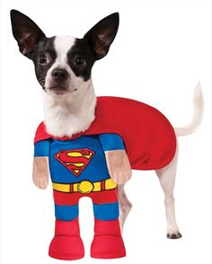 [Halloween Costumes for Dogs] Rubies Costume Company DC Comics Superman Pet Costume, Medium ** Details can be found by clicking on the image. (This is an affiliate link) Superman Halloween, Superhero Halloween Costumes, Halloween Costume Contest, Halloween Snacks, Halloween Cupcakes, Dog Halloween, Vintage Halloween, Superman 2, Halloween 2020