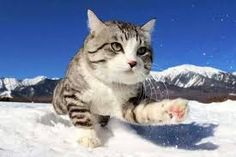 beautifulday,cat-When you have an adventurous soul 🐱by noraneko_nyankichicamping beautifulday cat cats pet traveling travelphotography tr Funny Cat Videos, Funny Cats, Cat Online, Buzzfeed Animals, Cute Cats And Kittens, Domestic Cat, Cute Animal Pictures, Nature Animals, Wildlife Nature