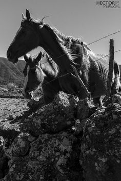 Animales, relax y naturaleza sin iguales en El paso, #LaPalma