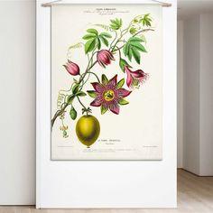 Combo Design is officieel dealer van Naturalis Unlimited ✓Passiebloem doek ✓ Verschillende varianten verkrijgbaar ✓ Gratis verzending (NL)✓ Ernst Haeckel, Natural History, Flora, Art Prints, Pillows, Wallpaper, Design, Art Impressions, Wallpapers